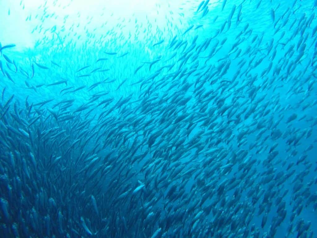 10 of the Best Dive Sites in the Philippines