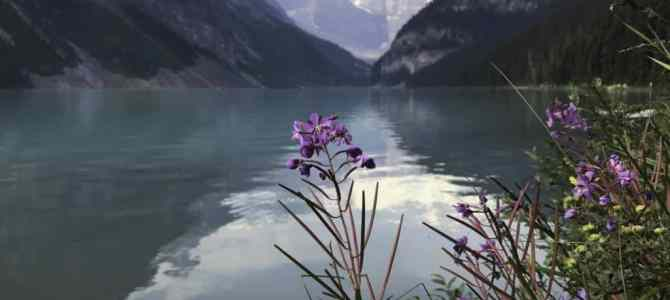 Lake Louise in the Summer: So Much More than a Photo Stop