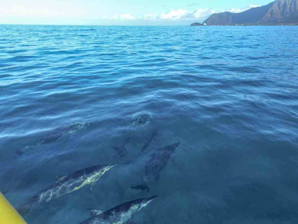 dolphins swimming under the boat