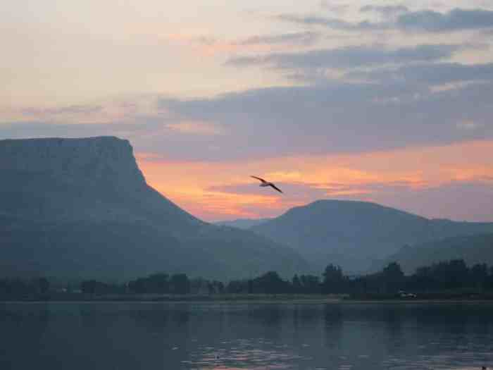 Sea of Galilee sunset with bird flying