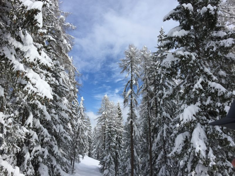 Tree-lined runs in Cortina d'Ampezzo