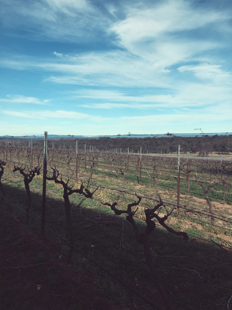 Hunter Valley | eat, write + explore