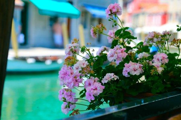 venice murano flowers 8