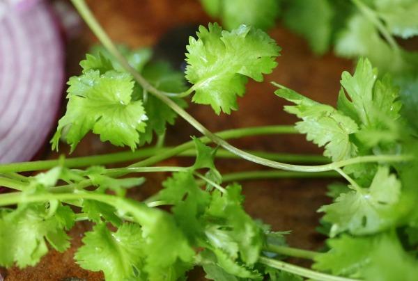 guacamole cilantro