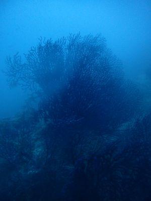 Vue sous marine