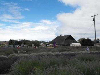 Sequim Lavender Festival 2011