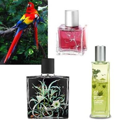 Brazilian rainforest perfume