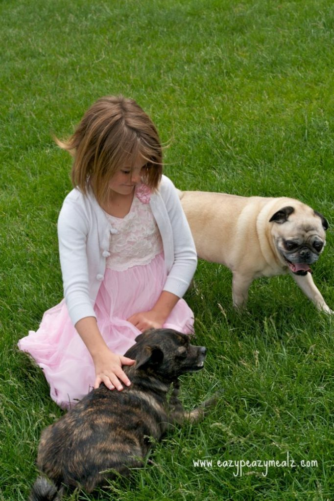 Lexi and the dogs