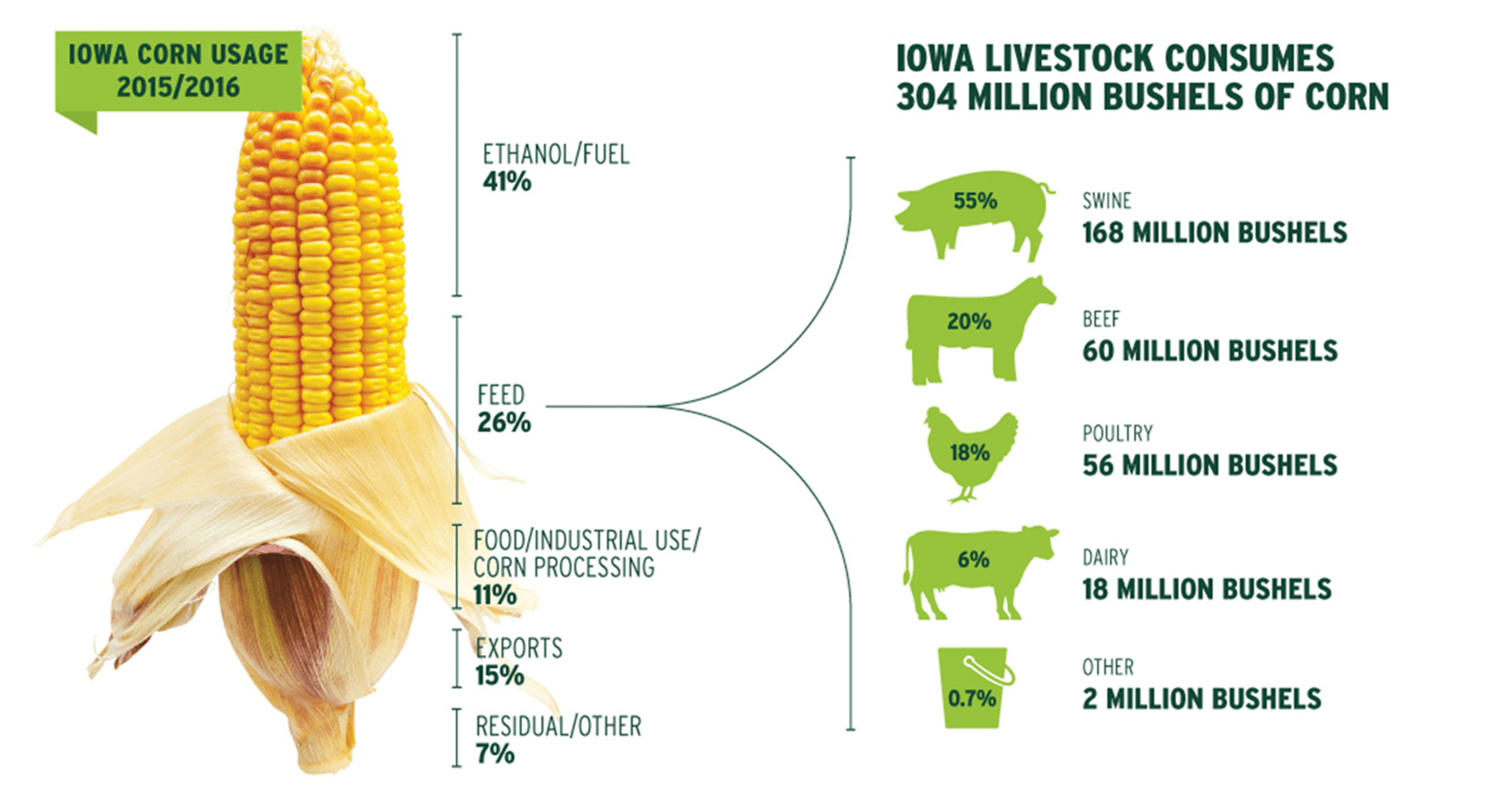 How is Iowa Corn used?