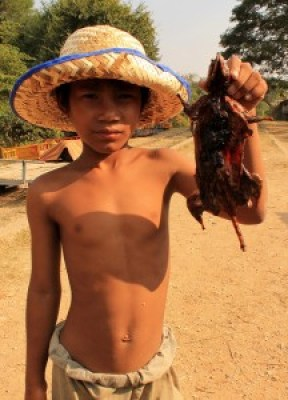 Young Boy Offering Grilled Rat