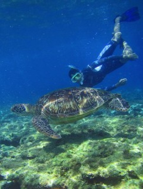 Snorkeling with Sea Turtle in Apo Island