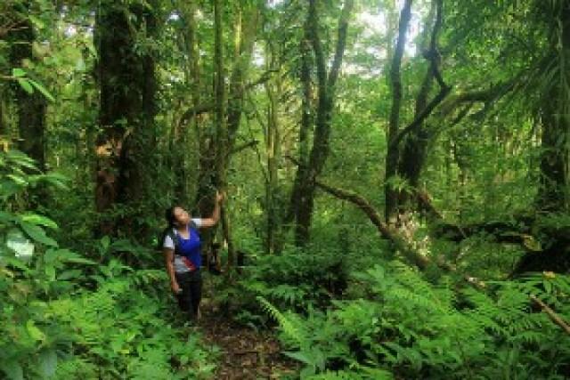 Mt. Hibok-Hibok Forest