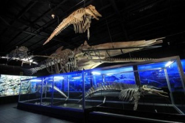 D' Bone Collector Museum