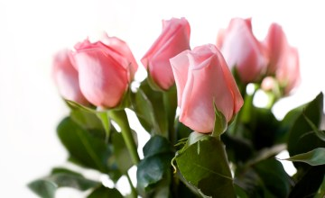 The Sweetest Romances Bloom with Gifts from FTD