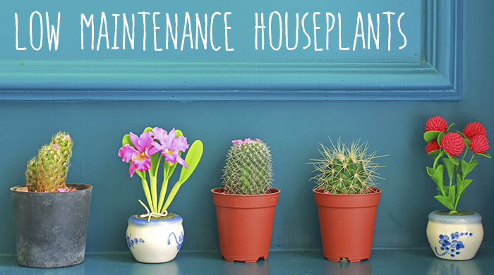 houseplantsheader