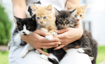 15 Things Every Cat Lady Needs Right Meow