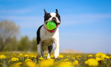 20 Ways to Pamper Your Pooch on National Dog Day