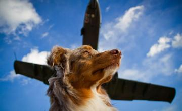 Jet-Setting Pets: How to Travel With Your Dog