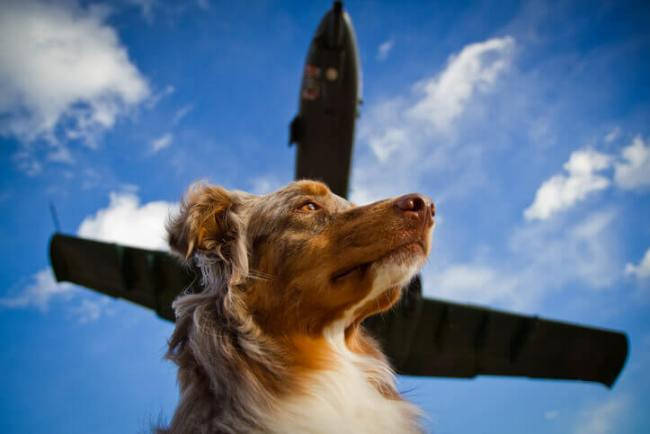 Dog with plane flying above