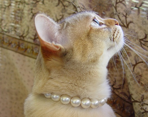 Pearl Cat Collar