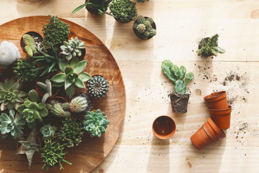6 Decorative Accessories Your Plants Would Love to Call Home