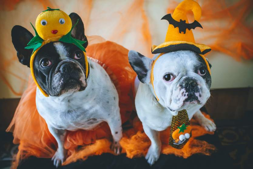 8 Adorable Pet Costumes for Your Furry Friend
