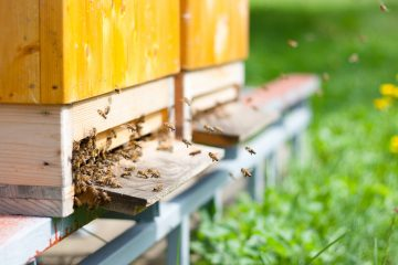 types of bee hives