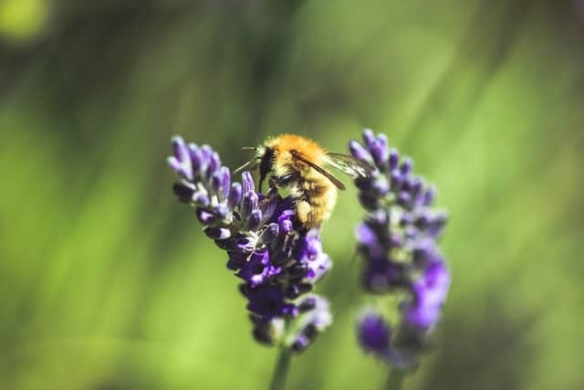 How to attract mason bees - EbeeHQ