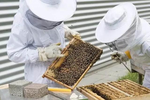 Top 7 Best Beekeeping Veils for Beekeepers