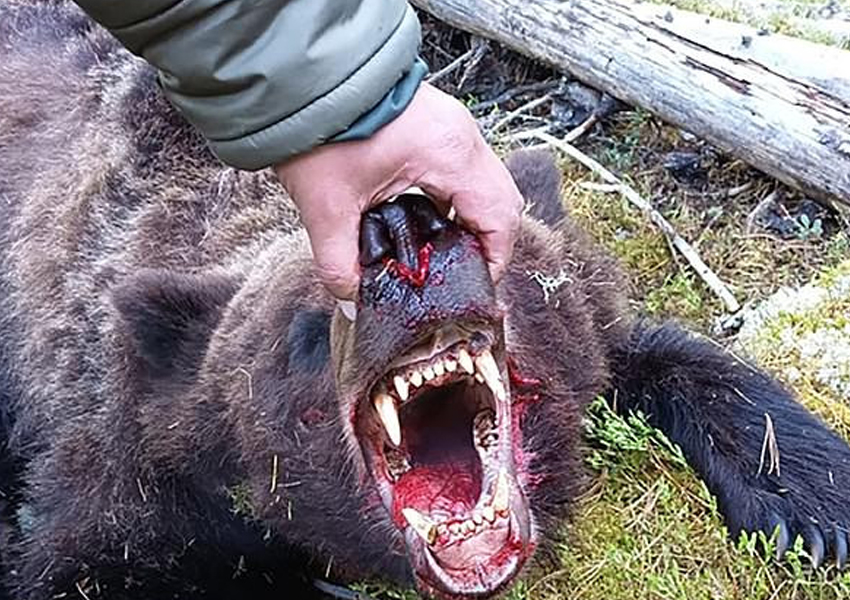 A brown bear has eaten and killed a 16-year-old boy at a Russian national park