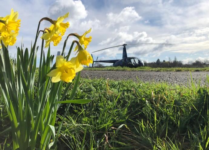 Daffs at the airfield.