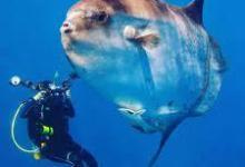 eBlue_economy_-Sunfish