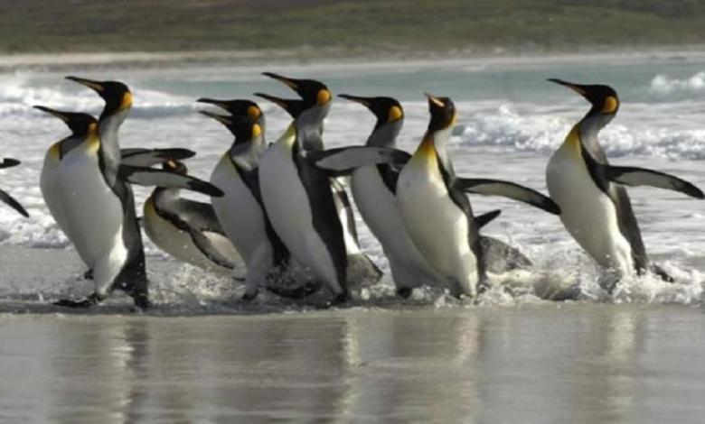 eBlue_economy_سر غاز_ الضحك _عند البطريق
