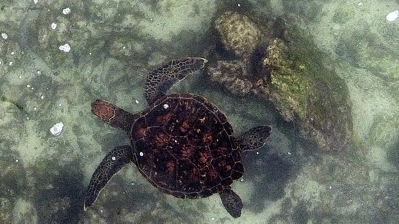 eBlue_economy_تعقب اسماك القرش والسلاحف البحرية فى جزر خالاباجوس