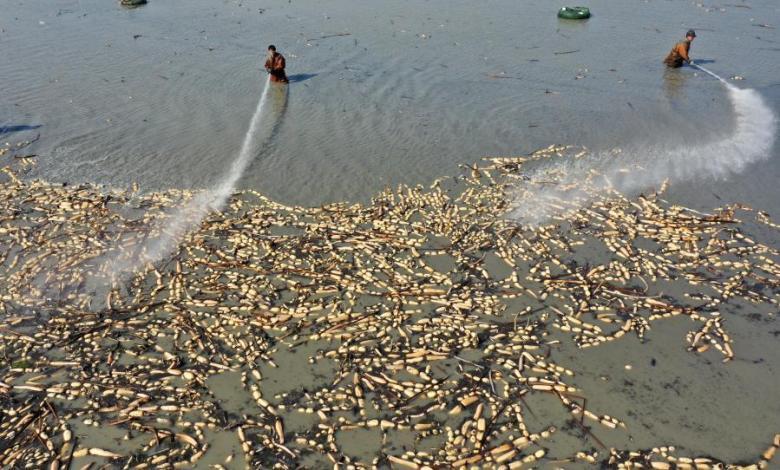 eBlue_economy_حصاد جذور اللوتس في مقاطعة أنهوي الصينية