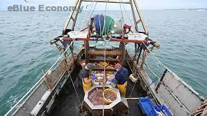 eBlue_economy_New Fisheries Observer Information and Education