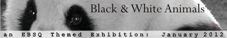 EBSQ Art Exhibit: Black & White Animals