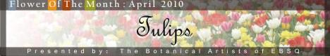 Online Art Exhibit:Flower of the Month: Tulips '10
