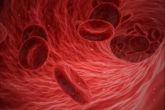 omar kaakati blood type