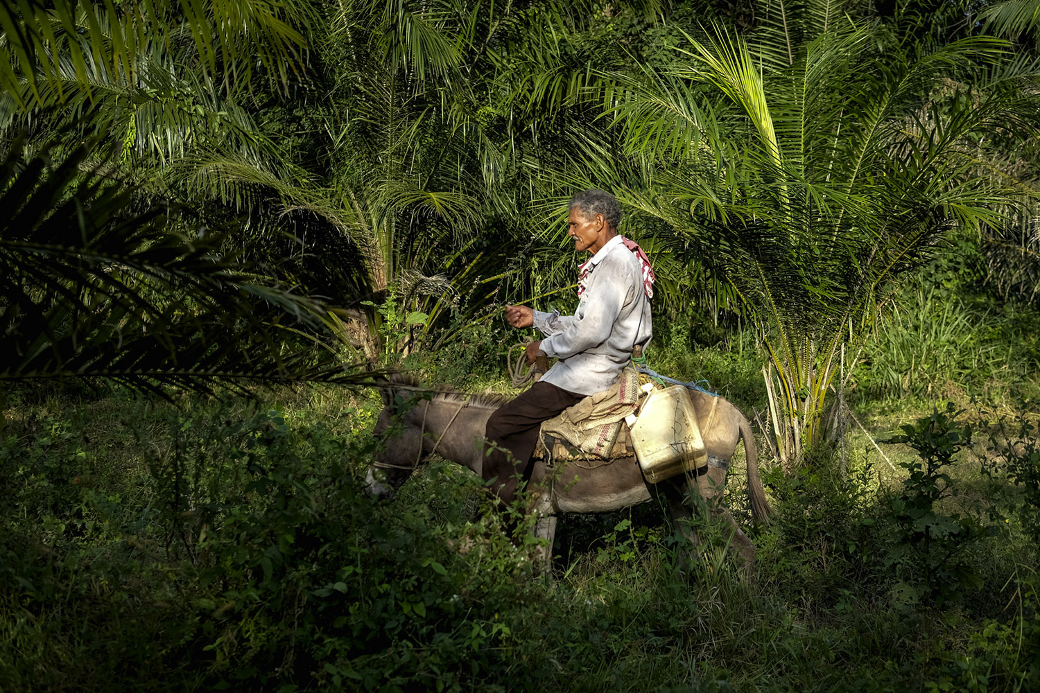Efrain Alvear rides his faithful donkey through land that his daughter used to farm on but lost eventually in a violent land grab by palm oil company Aportes San Isidro in 2012. Photo: Caldwell Manners