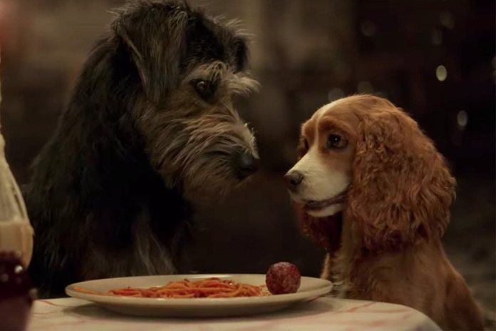 'The lady and the tramp'