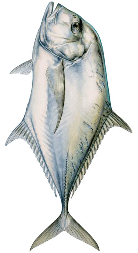 Fishing in Florida: African Pompano – ECB