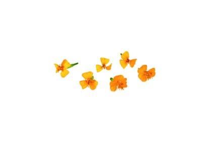 Anise Blossom – anice speziato