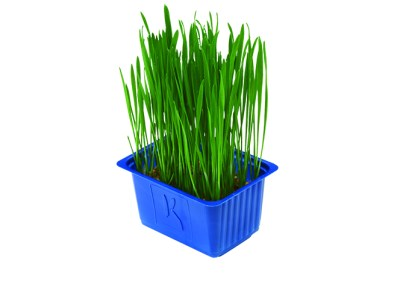 Wheat Grass – erba di grano