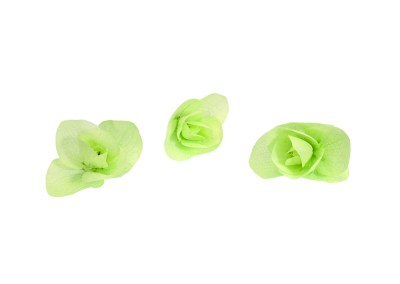 Floregano – fiore di origano
