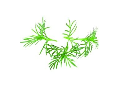 Paztizz Tops- foglie di anice
