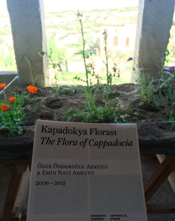 kapadokya florasi