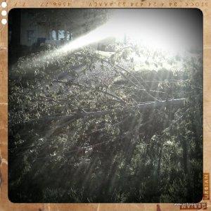 Nerfallna träd på området