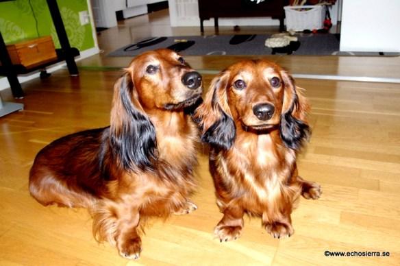 Alf och Theo