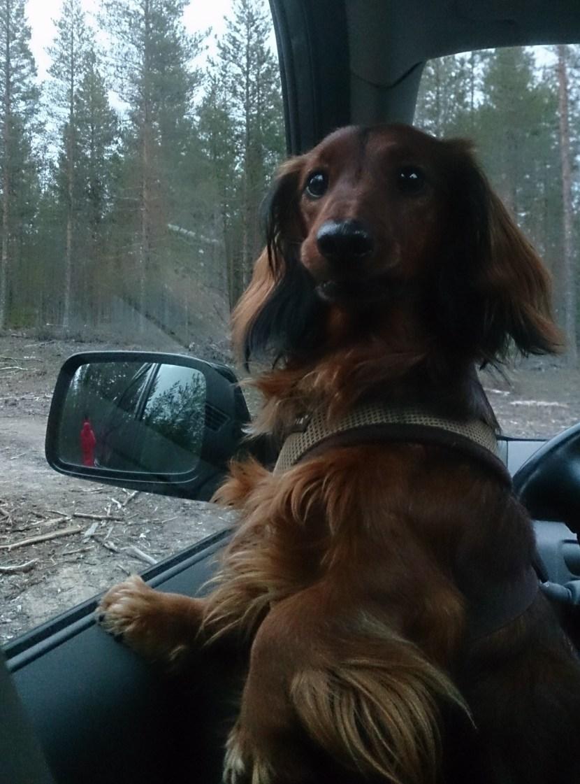 Theo väntar otåligt på att Alf ska komma tillbaka!